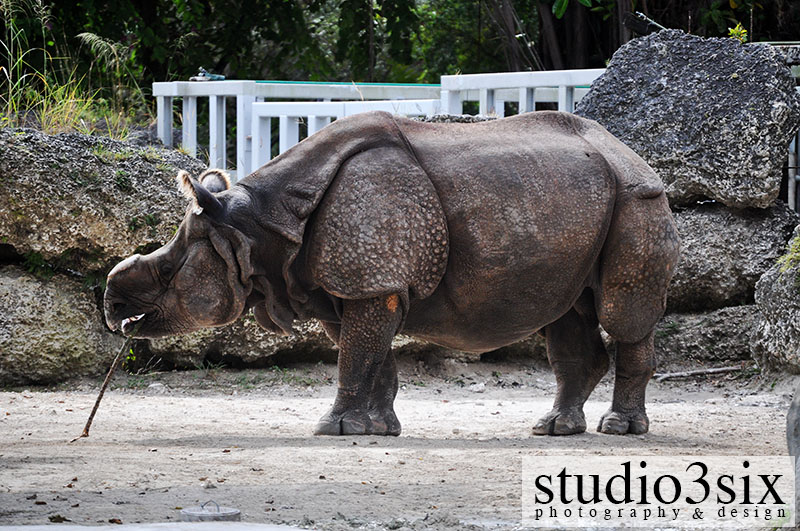 Other Rhino